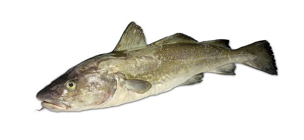 Food culture what to expect in 2010 the list for Cod fish mercury