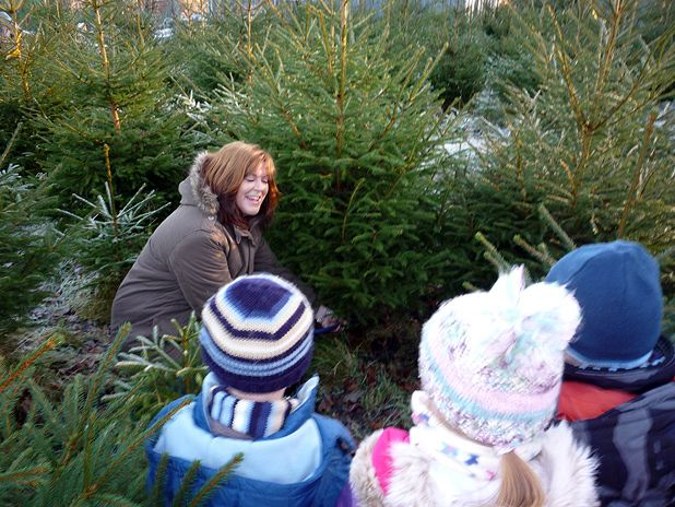 The best places to buy Christmas trees in Glasgow and Edinburgh