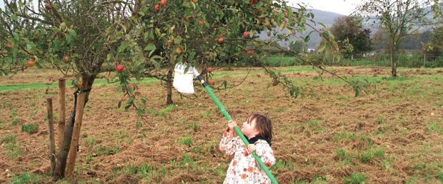 Angus' Orchards Project flourishes