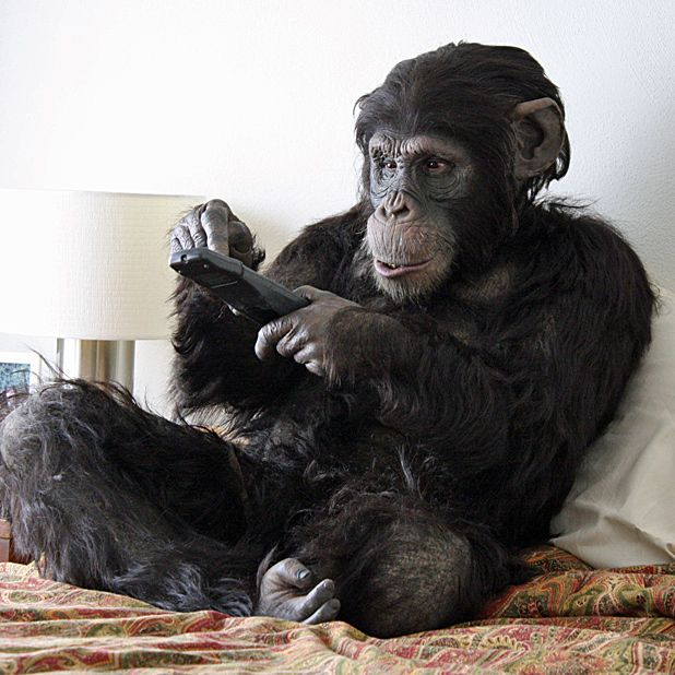 Rachel Mayeri: Primate Cinema - Apes as Family